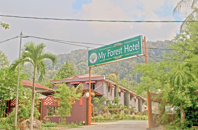 My Forest Hotel